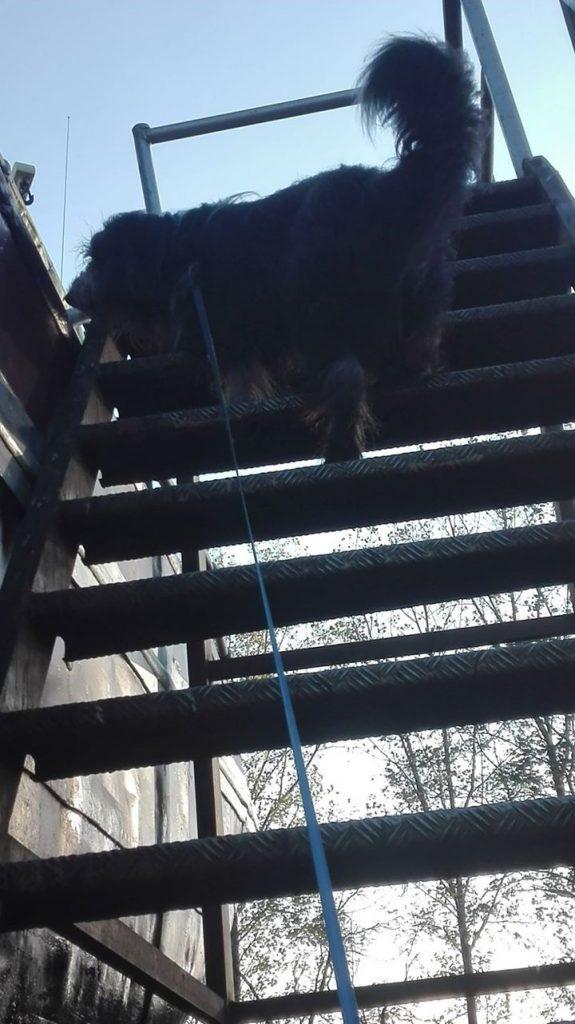 trap klimmen in de werf
